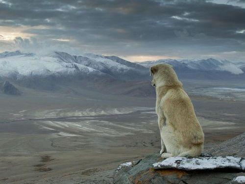 ヒマラヤ登山に犬が着いてきた02
