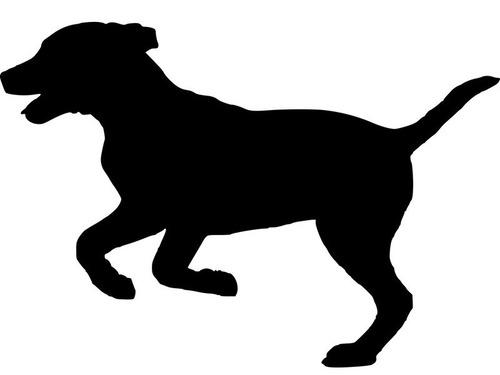 うちの犬の脚線美