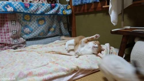 猫に挑むウサギ03
