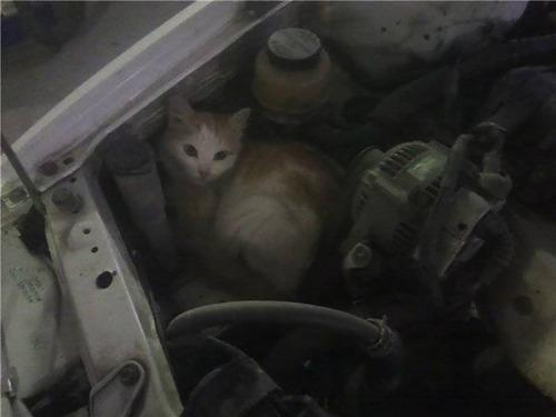 車の中にいる動物10