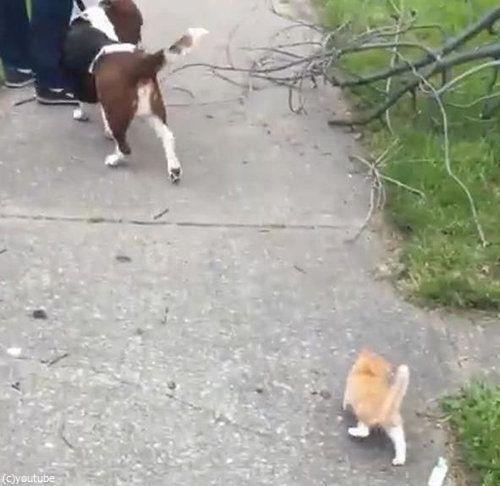 犬の散歩をしていたら迷子の子猫がついてきた01