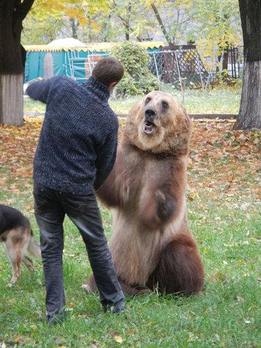 ロシアのクマ26