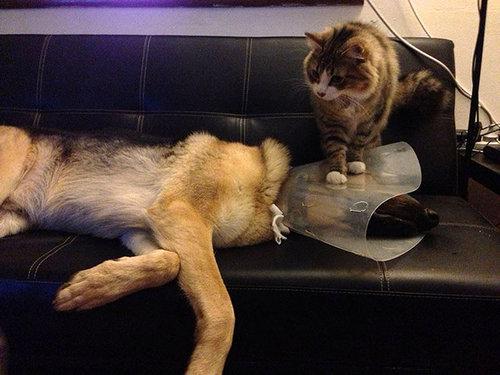 犬や猫を獣医に連れて行くと20