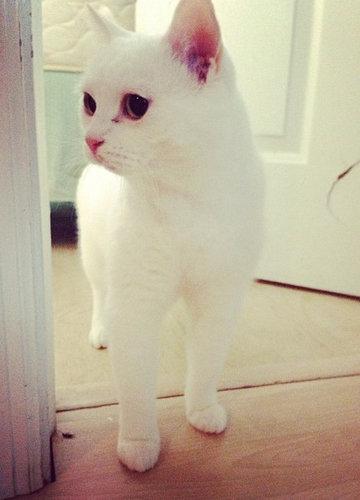 20歳の猫01