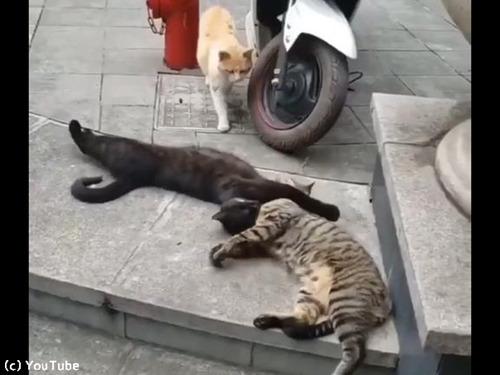 猫の修羅場シーン00