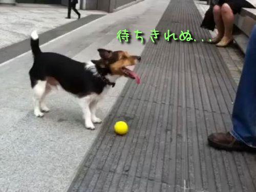 自己完結犬