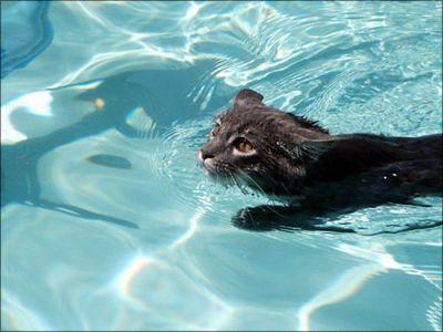 泳ぐ猫02
