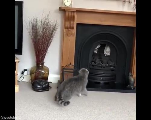 猫、暖炉に上ろうとするも失敗01