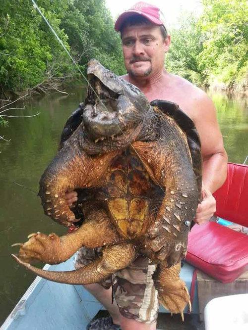 オクラホマで釣れたカメ01