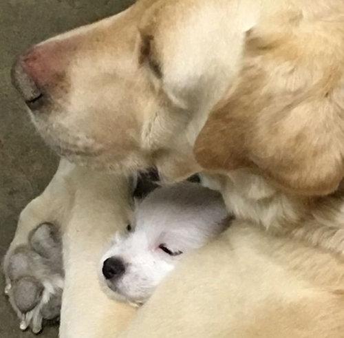 犬と子犬02