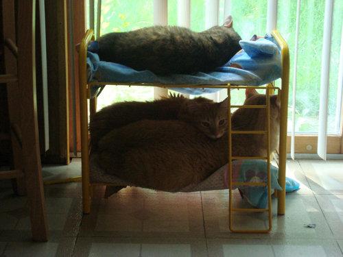 猫のための2段ベッド02