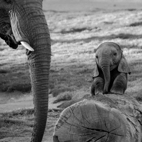 06動物の赤ちゃんたち・Baby