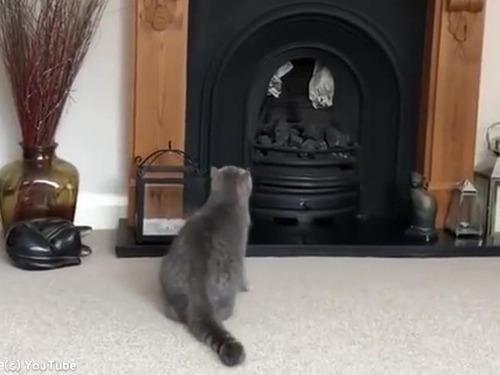 猫、暖炉に上ろうとするも失敗00