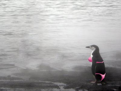 ペンギンガール05