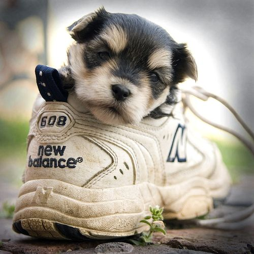 靴の中の犬15
