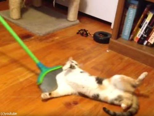 掃かれたい猫03