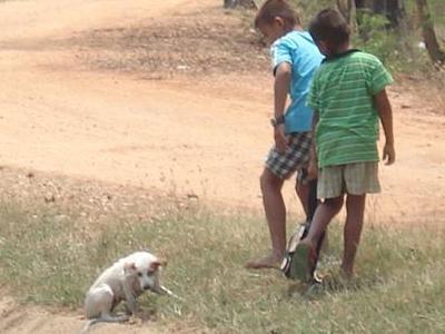 愛と勇気と犬の救助06