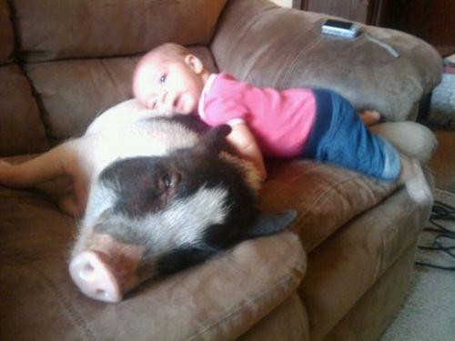 ペットと赤ちゃん05