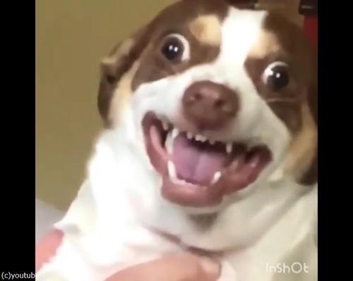 飼い主にキスされた愛犬の顔が03