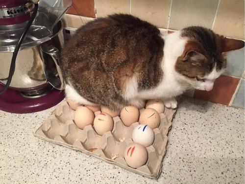猫に敗北した人々07