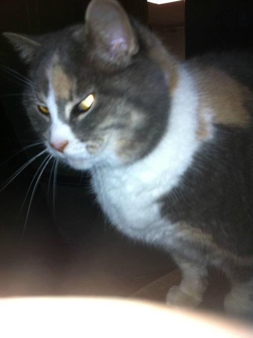 写真写りの良い猫09