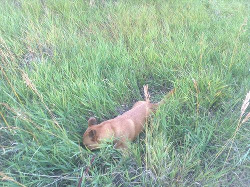 うちの犬は腰が悪いのにハイキングが大好き07