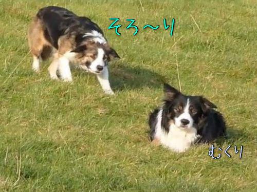 「犬が犬の背後から忍び寄る…」00