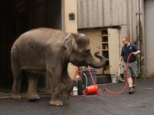 ゾウに動物園を巡らせたら00