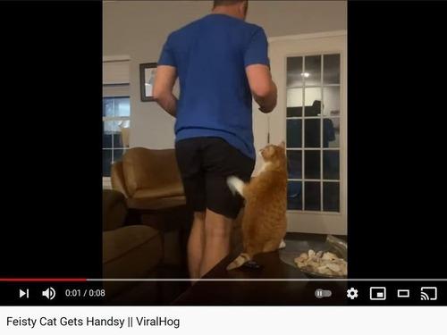 飼い主のおしりを狙う猫