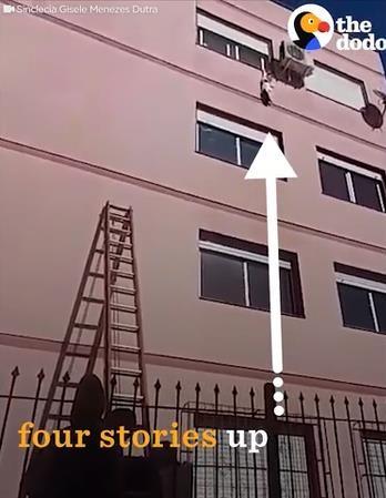 ビル4階で動けなくなった猫を救出01