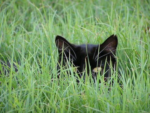猫は見ている02