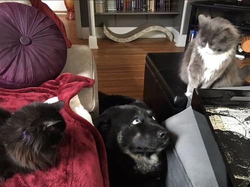 犬と猫の仲がよろしくないとき11