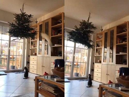 逆さツリーと猫02