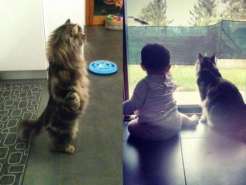 女の子を守る猫00