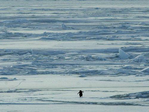 ペンギンひとり02