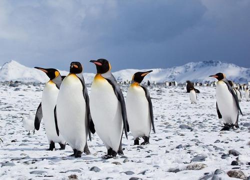 車内に赤いペンギン00