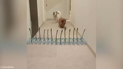 アスパラガスVS犬02