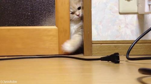 ドアを開けて欲しい猫01