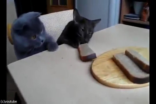 「泥棒猫2匹が私のパンを盗むとき」07