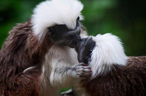 動物たちのキス13