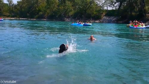 豪快に泳ぎを教えてくれる犬02