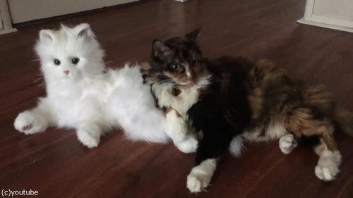 猫型ロボットと初体面した猫たち09