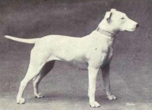 犬種は100年でこう変わった05
