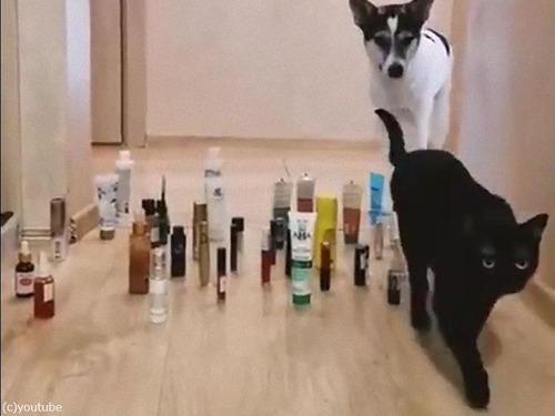 猫と犬の障害物回避02