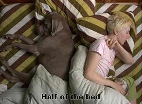 犬の寝場所07
