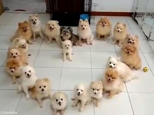 子犬でハート01