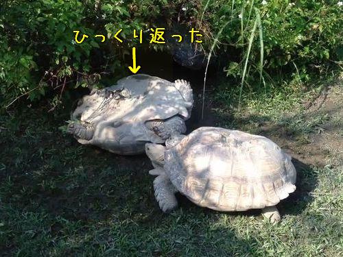 大きな亀の友情00