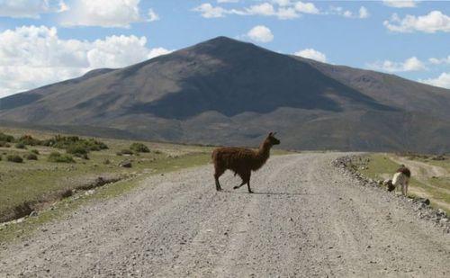 道路を渡る動物05