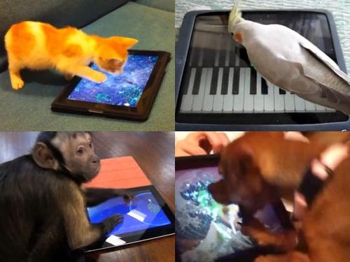iPadで遊ぶペット