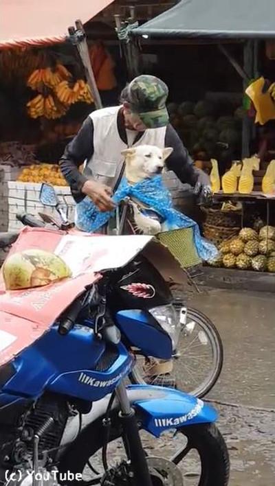 降りだした雨…飼い主さんが愛犬にとった行動に心温まる01